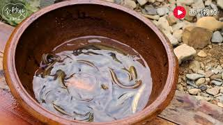 农田野生黄鳝泥鳅快绝种了吗,挖了3天才做出一道美味佳肴