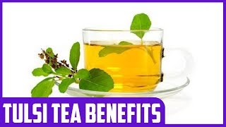The Health Benefits of Tulsi Tea (Holy Basil)