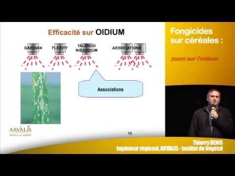 Human protozoak kezelése