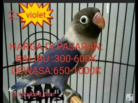mp4 Jual Lovebird Batman Medan, download Jual Lovebird Batman Medan video klip Jual Lovebird Batman Medan