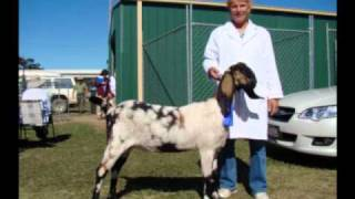 Anglo Nubian Shows 2010 from Hidden Valley Anglo Nubian Stud