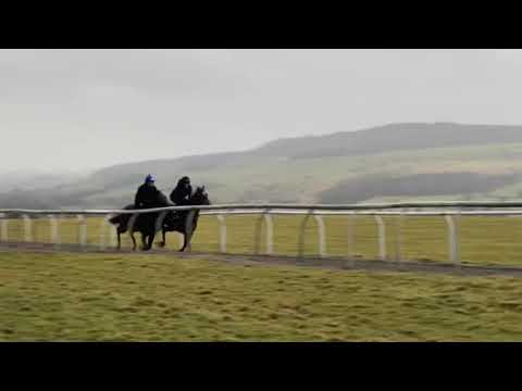 Havana Gold x Showstoppa 2019 bay colt on the Low Moor gallop(far side)
