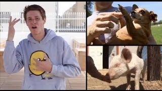 Why Animal Rights? (ASL)