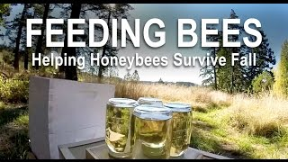 Feeding Bees for Fall and Winter Survival in the Northwest
