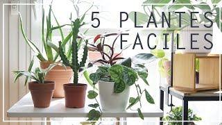 🌿 5 Plantes Dintérieur Faciles à Entretenir