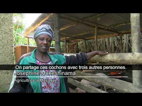 Rwanda, l'agroécologie au service de l'homme