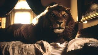 Смотреть онлайн Чудеса аниматроники: настоящий лев
