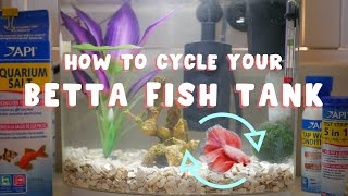 How To Cycle A Betta Fish Tank | Easy