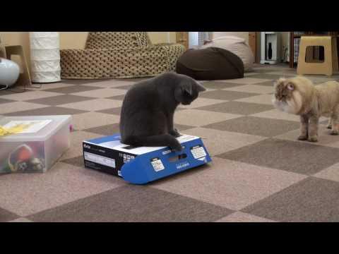 Najwredniejszy kot na świecie