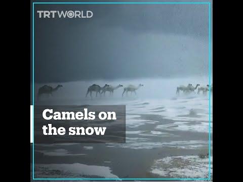 У пустелі Сахара випав сніг (відео)