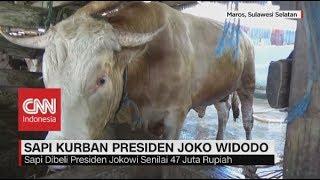 Video Ini Nih Sapi Kurban Milik Presiden Jokowi, Berat Nyaris 1 Ton, Idul Adha 2018 MP3, 3GP, MP4, WEBM, AVI, FLV Agustus 2019