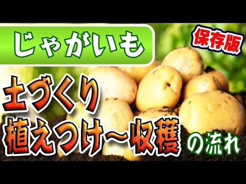 , title : '【保存版】ジャガイモの育て方【種イモ・植え付け〜収穫まで】すべての流れがこれで分かる!【土作り】