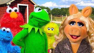Kermit the Frog meets Miss Piggy at the Petting Zoo! Ft Elmo, Cookie Monster & Big Bird