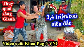Thuồng Luồng Siêu Đắt Đỏ Có Giá Ngang Bò Kobe - Video Cuối Cùng Khoa Pug Tại Việt Nam - Tạm Biệt!