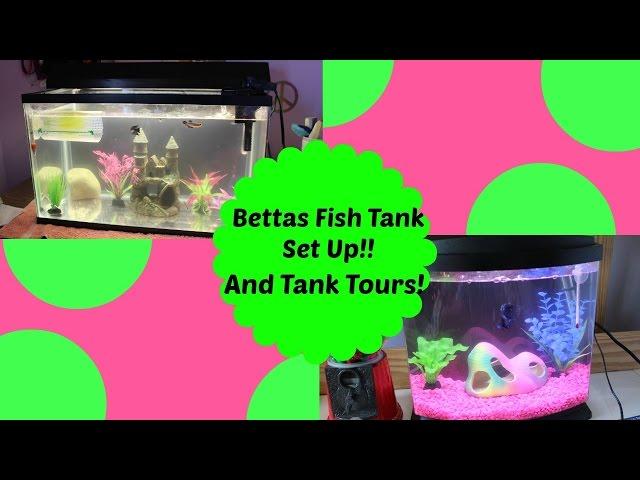 My Bettas Fish Setup!Tank Tours!