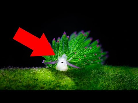 Sea Slugs That You've Probably Never Seen And They Look Like Aliens!