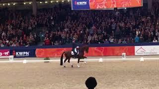 2 nouveaux chevaux rejoignent l'équipe B néerlandaise