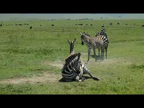 Tanzania safari- Best Safari Tours in Tanzania, African Safari