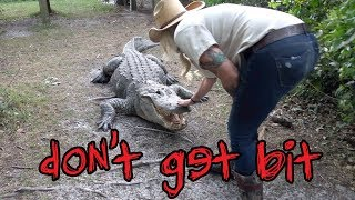 Why You Shouldn't Mess With Alligators