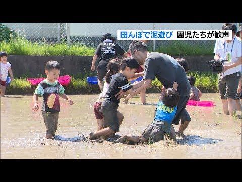 田んぼで園児が泥遊び どろんこ楽しいよ