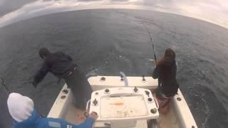 5 Way Bluefin Tuna