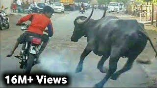 Most Funny Tik Tok Funny Video Pakistani. tiktok videos