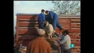preview picture of video 'La Estacion de Brazatortas Veredas'