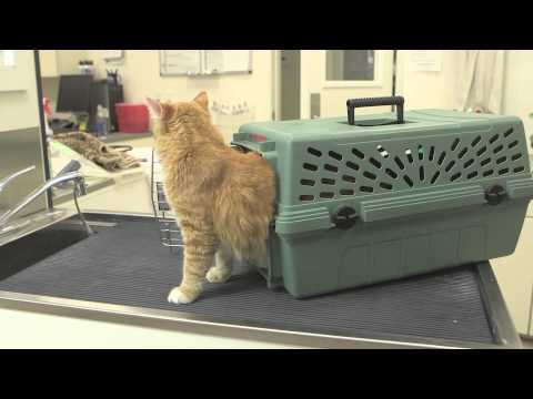 Tips on Taking Your Mature Adult Cat to the Veterinarian : General Cat Health