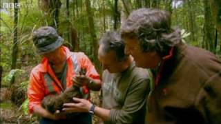Download Youtube: Last Chance To See - The Kiwi - BBC Two