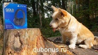 Первый августовский совместный заказ на computeruniverse.ru feat. Пёс