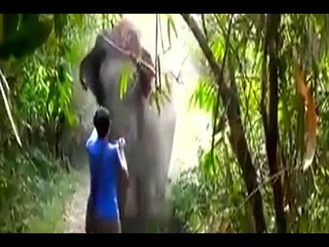 Charging Elephant STOPPED With A Wave - Face To Face Encounter With An Elephant!!!