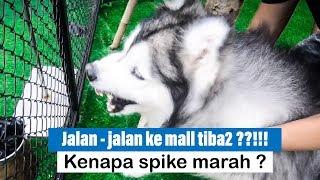 Video Jalan - jalan ke MALL bareng SPIKE & NALA, TIBA - TIBA ??!!!! - VLOG MP3, 3GP, MP4, WEBM, AVI, FLV September 2019
