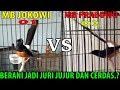 Murai Batu Prabowo VS MURAI BATU JOKOWI ADU Gacor nama burung hanya pemanis saja