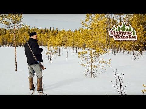 Поход в лес весной. Часть 2/2 (зима, лес, охота)