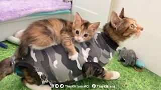 Kitten or baby possum?