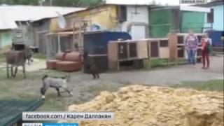 Козленок и ослик резвятся