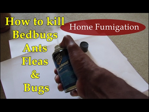 DIY Pest Control - How to Get Rid Of Ant, Fleas & Bed Bugs
