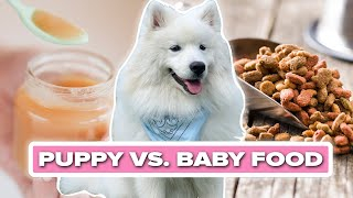Puppy Tries Baby Food For The First Time thumbnail