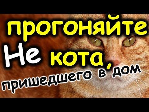 Как кошки помогают хозяевам , чтобы избежать беду . Приметы о кошках | Эзотерика для Тебя | Советы