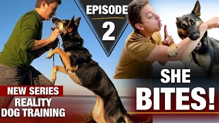 The place to Begin with a TOTALLY UNTRAINED DOG: Actuality Canine Coaching Episode 2