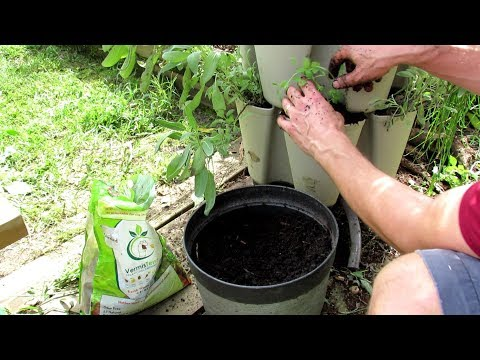 Vertical Container Vegetable Gardening: Planting Cool Weather Lettuce, Peas, Spinach & Arugula