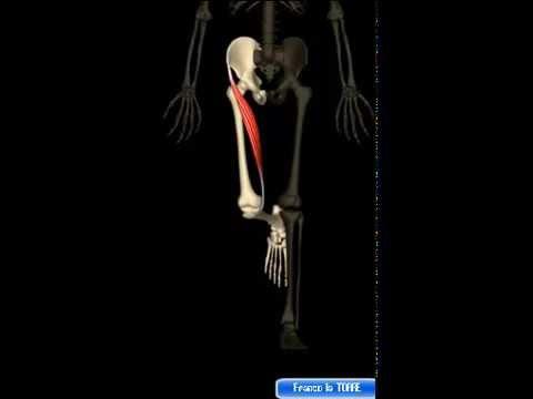Osteocondrosi in cui le vitamine