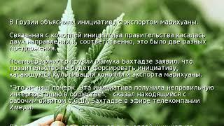 В Грузии объяснили инициативу с экспортом марихуаны