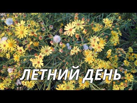 Летний день.Красивая музыка.Сергей Чекалин музыка для души.