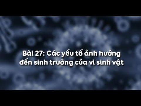 Sinh học 10: Bài 27 Các yếu tố ảnh hưởng đến sinh trưởng của vi sinh vật (Cô Bùi Thị Tuyết Mai)