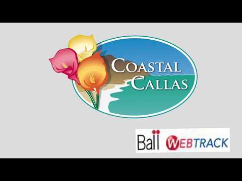 Coastal Callas 2020 Bulbs thumbnail