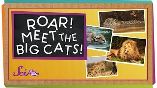 Roar! Meet the Big Cats! | Animal Science for Kids