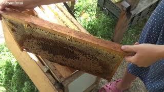 Из чего и как делают мёд? Пасека. Пчеловодство. Лето в деревне.