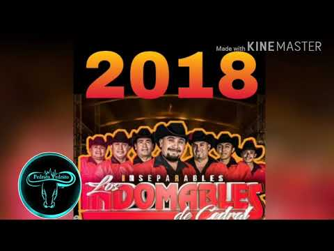 Los Indomables   La Bronca🎵 Huapango 2018
