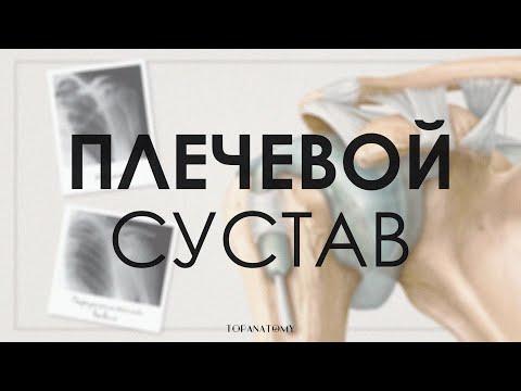 Плечевой сустав: строение и функции. Вывих плечевого сустава
